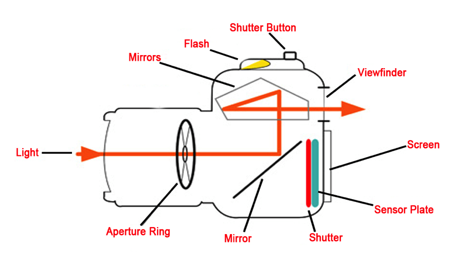 Camera Diagram dslr cameras the facts!