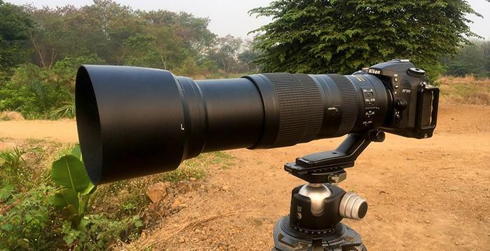 Could the Nikon 200-500mm be the Most Versatile Wildlife Lens? - Cameraland Sandton