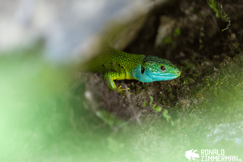 Photographing Wild Amphibians and Reptiles | Cameraland Sandton