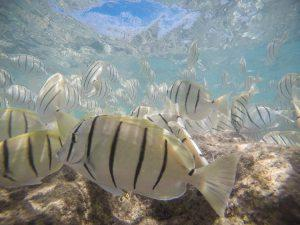 5 Tips for Underwater Photography with a GoPro Cameraland Sandton