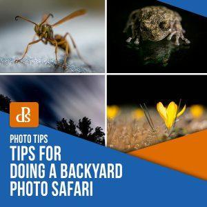 Tips for Doing a Backyard Photo Safari Cameraland Sandton