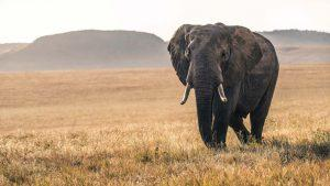 Tips for Wildlife Video With Sony Alpha Cameras